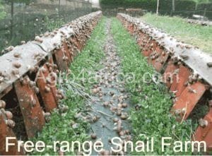 snail housing/free range snail farm