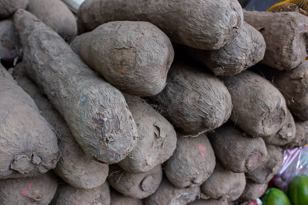 Yam-crop-farming-business-idea