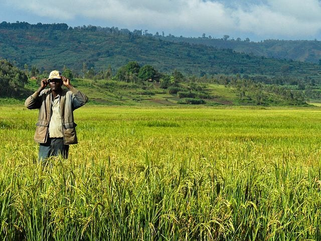 agro-business-ideas-rice-farming-business