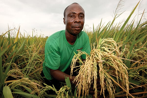 crop-farming-business-ideas-agro4africa