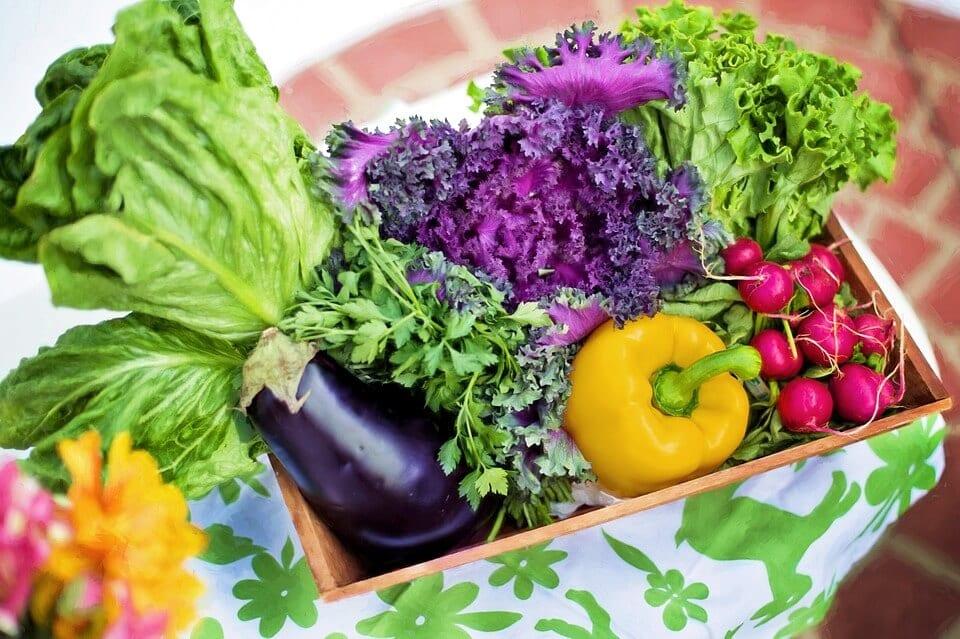 vegetable-farming-business-idea