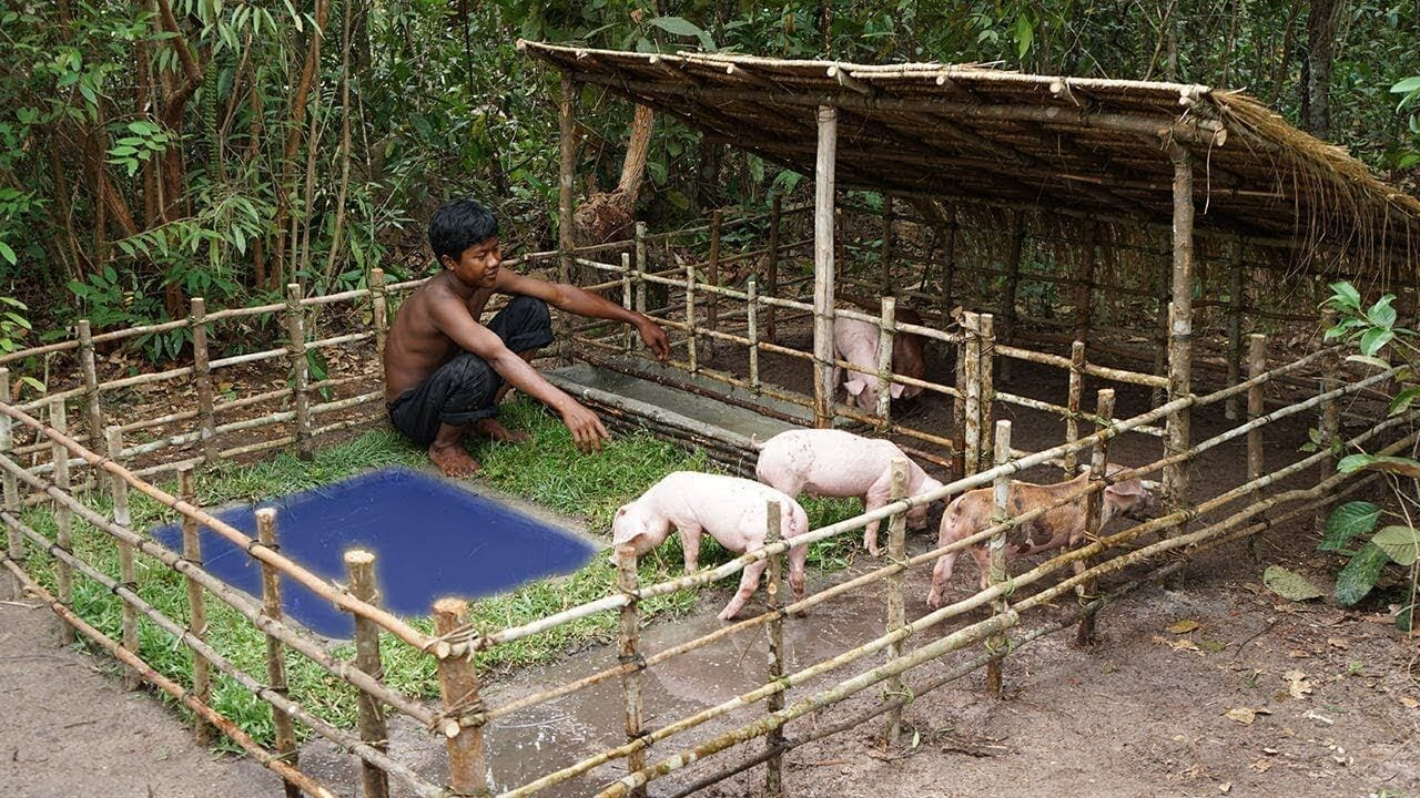 Swimming pool for commercial pig farming business