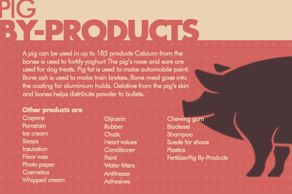 commercial pig farming business infographics