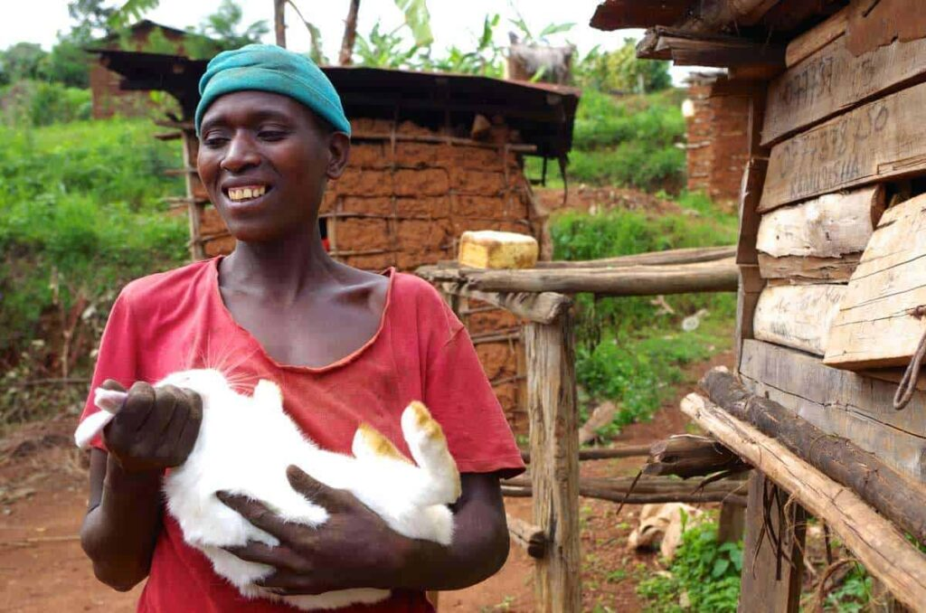 How-to-start-and-make-money-from-rabbit-farming-business