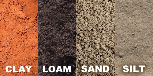Loam-soil-is-the-best-soil-for-snail-farming