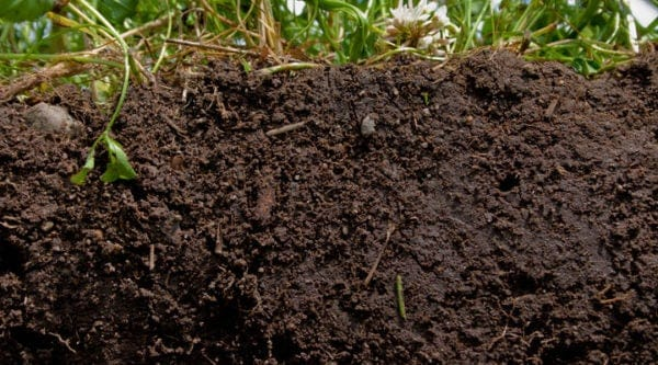 characteristics-of-Loam-soil-for-snail-farming