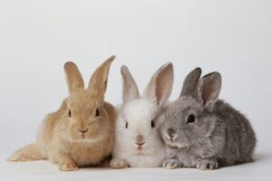 rabbit farming business guide