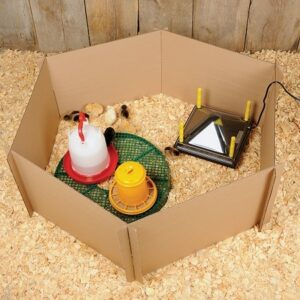 what is chicken brooder and how to build one