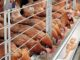 how to make maximize and increase profits in poultry farming